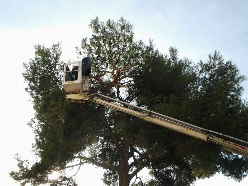 tala, corte de Pino en Tarragona