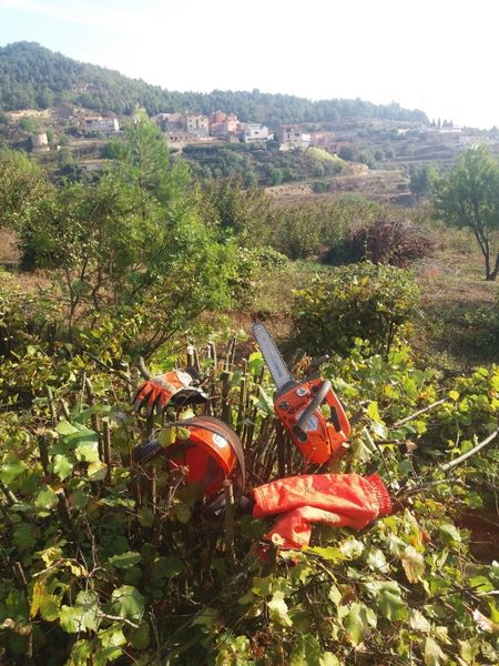 Treballs Forestal a Colldejou