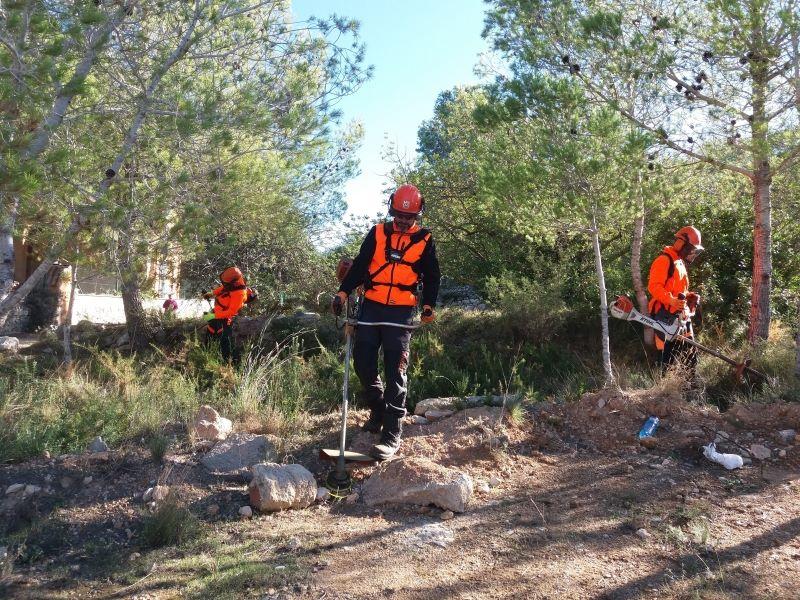 Limpieza bosque en Prades