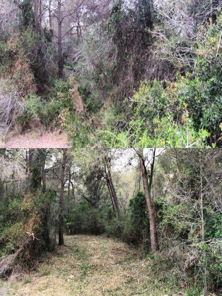 antes y despues,  limpieza bosque Tarragona