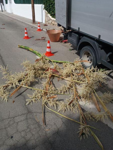 limpieza de jardin en Reus