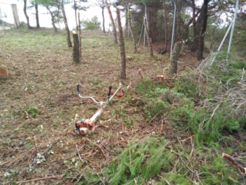 trabajos forestales bosque de Falset