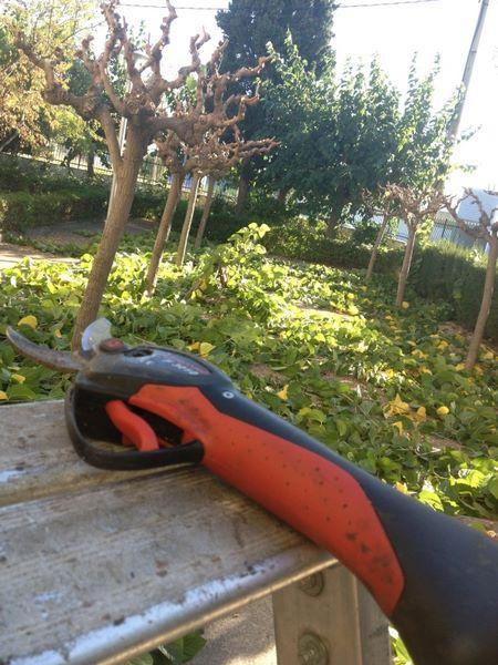 poda arboles en Comunidad de Tarragona.