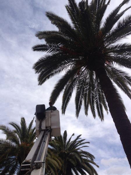 mantenimiento palmeras Comunidad de Reus