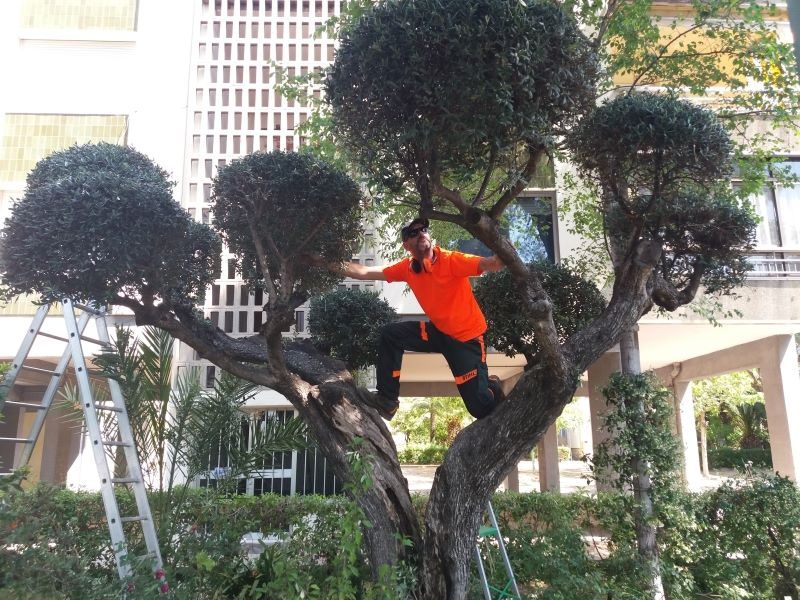 servicio de jardineria, Salou