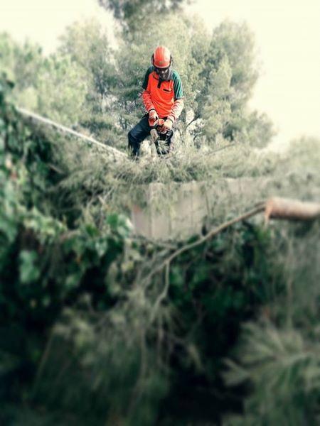 trabajos motosierra bosque Tarragona